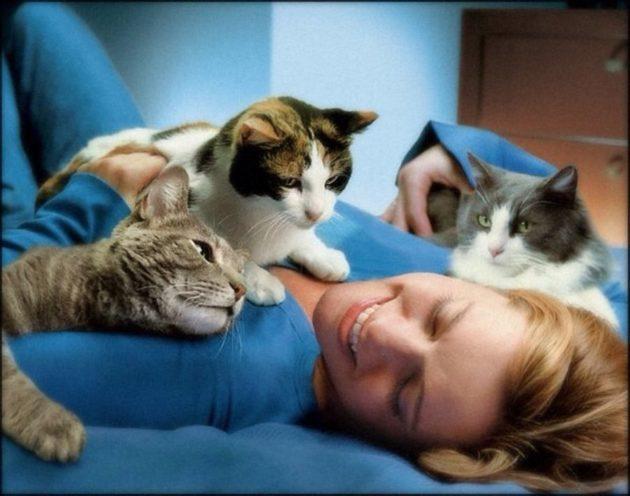 Фелинотерапия. Как лечат кошки